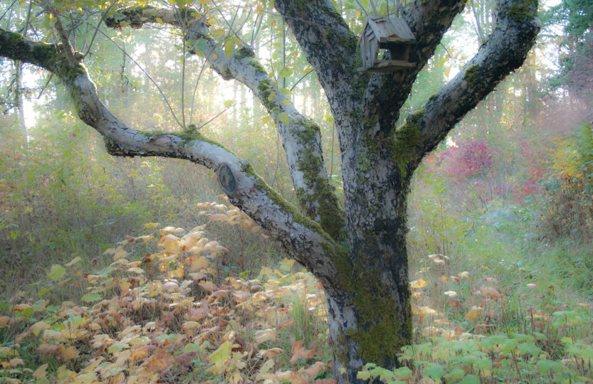 A tree, bare of leaves in mid autumn, takes on a mystical sheen in the late afternoon light - Photo by David Innes