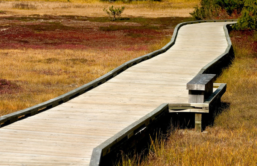 Wooden walkway in Paradise Meadows, Strathcona Park Vancouver Island BC - Photo by David Innes
