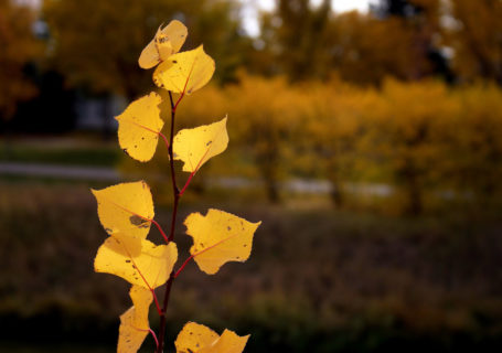 Fall leaves on Wascana - Photo by David Innes