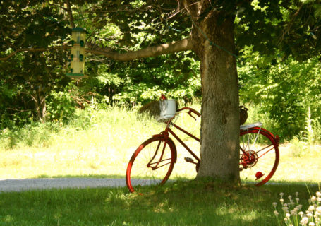 Red bicycle leans against tree, Saint- Sauveur, Quebec - Photo by David Innes